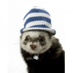 Marshall - Visor Cap sombrero para hurones