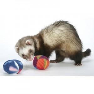 Marshall Polar Bell Toys juguete para hurones