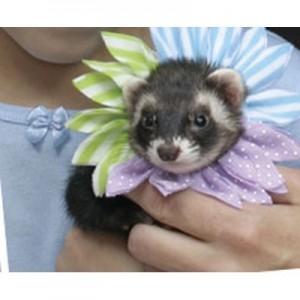 Marshall - Collar Flor para hurones