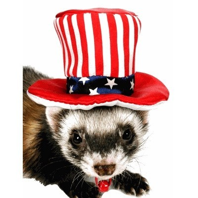 Marshall - Uncle Sam Hat sombrero para hurones
