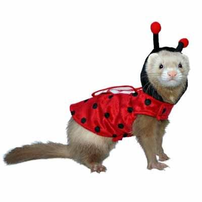 Marshall - Disfraz de LadyBug para hurones