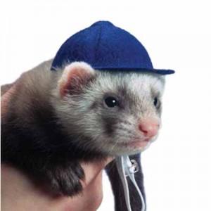 Marshall - Gorro de Beisbol para hurones