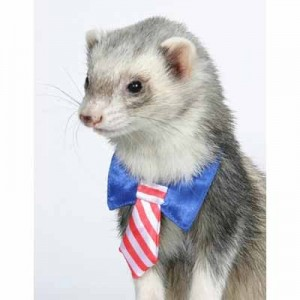 Marshall - Corbata Patriotica para hurones